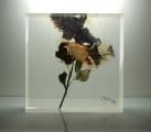 Bloc-de-plexiglas-avec-inclusion-23-x-23-x-6-cm-2012